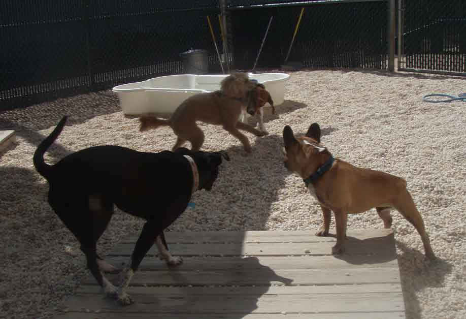 April play at CBW | Camp Bow Wow, Greenville